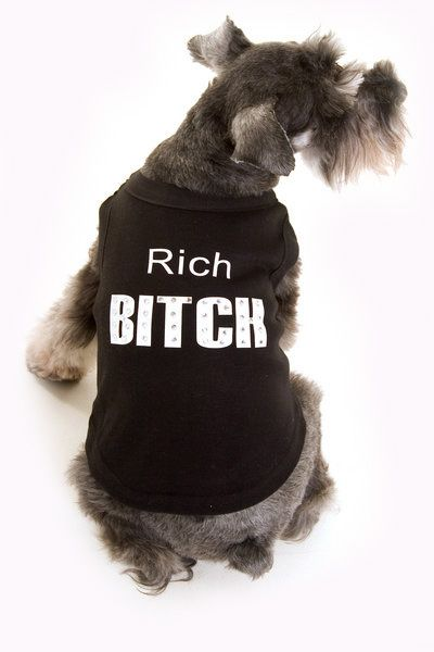 Rich Bitch Dog T-Shirt - Various Sizes Available 1 RichBitchDogTshirt5Bfullscreen5D