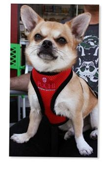 Waffle Dog Harness and Lead in Red 1 waffleharnessinred5Bfullscreen5D